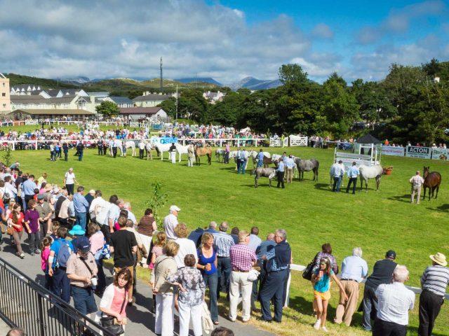 Connemara Pony Show Festival