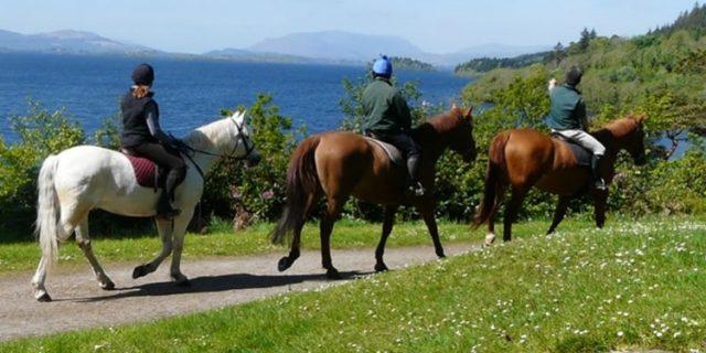 Ashford Equestrian