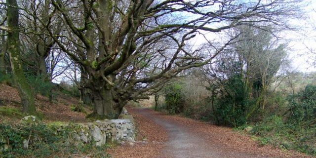 Barna Wood